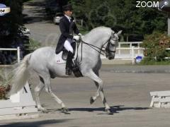 photo de Dressage Horse Collection CDI 3*